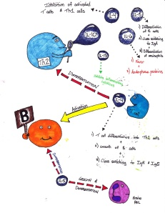 Immunology Cartoon 1
